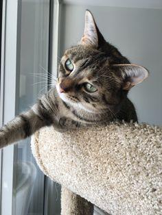 contemplative kitty