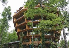 Baobab Tree Hotel - Huilo Huolo - Biological Reserve - Chile