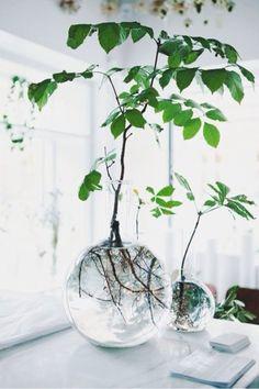예쁘게 모아 심어져 있는 식물들도 좋지만가끔은 심플하게 하나의 식물 그 자체의 개성을 살려심어주고 싶...