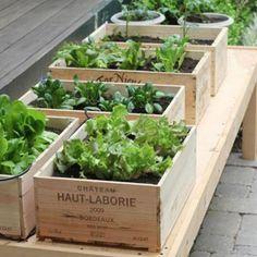 Des caisses en bois en guise de jardinières
