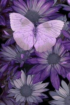Purple Butterfly Painting by Darrell Gulin - Purple Butterfly Fine Art Prints and Posters for Sale