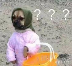 Funny Animal Jokes, Cute Memes, Really Funny Memes, Cute Funny Animals, Stupid Funny Memes, Funny Cute, Funny Dogs, Baby Animals Pictures, Cute Animal Photos