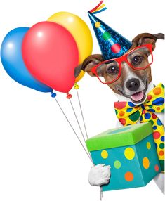 Birthday dog with balloons Happy Birthday Ballons, Happy Birthday Art, Happy Birthday Images, Birthday Pictures, Cute Birthday Quotes, Funny Birthday Cards, Birthday Greetings, Animal Birthday, Dog Birthday