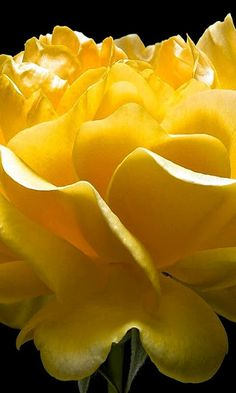 Flower World ( C.JOHN D ) - Comunidade - Google+