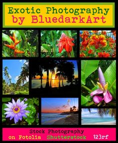 "☀#Exotic #Photography by #BluedarkArt ☀ by bluedarkart on #Polyvore  ""My #Tropical #Soul"" • bluedarkart.wordpress.com •  https://bluedarkart.wordpress.com/2015/05/23/%e2%98%80exotic-photography-by-bluedarkart-%e2%98%80"