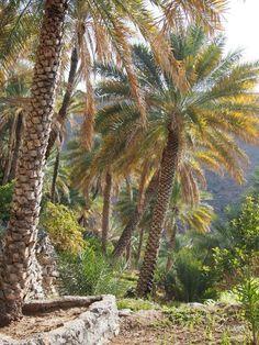 Sultanate Of Oman, Tree Tunnel, Destinations, Arabian Peninsula, Arabian Sea, Islamic Paintings, Palmiers, Oman Travel, Biomes