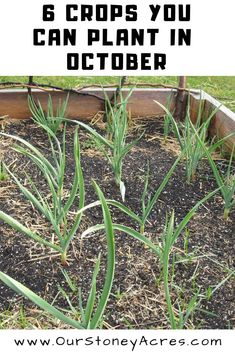 Even though it is late in the fall there are still a few crops you can plant in October in your backyard garden. #vegetablegardening #fallgardening #fallplanting