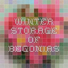 Winter Storage of Begonias
