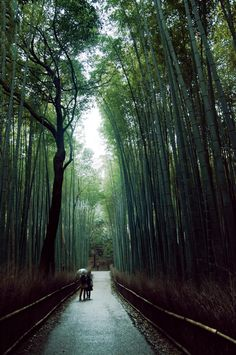 Sagano bamboo forest (Arashiyama, Japan) (by marcusuke) Arashiyama (嵐山) is a district on the western outskirts of Kyoto, Japan. It also refers to the mountain across the Ōi River, which forms a backdrop to the district