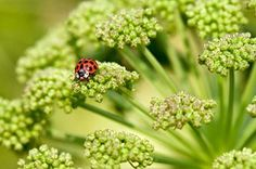 The importance of insects in gardens: why you should encourage insects / RHS Gardening