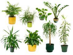 10 onverwoestbare kamerplanten