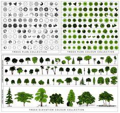 деревья на фасад и генплан