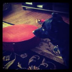 Step away from the upside down dog bed ... there isn't a bone buried there.