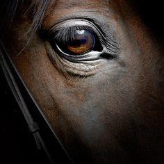 Un magnifique oeil de cheval qui nous fait sentir.... vide