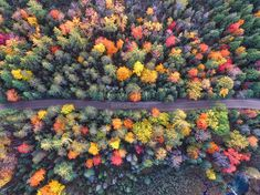 The autumn forest Autumn, autumn, autumn, natural landscape, aerial, overhead, woods, forests, trees, autumn leaves, autumn leaves, road, landscape lake