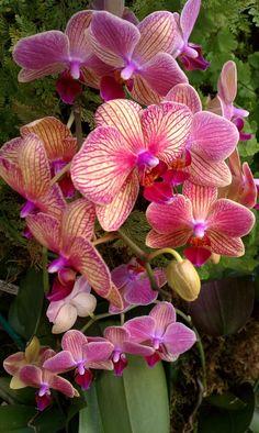 A maior exposição de Orquídeas dos EUA - Flores de Lulu - Estadao.com.br