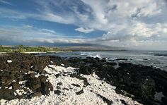Ask the concierge at our Kona seaside hotel about sightseeing opportunities at the awesome coral reefs in Kona Kailua.