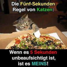 Regel von Katzen