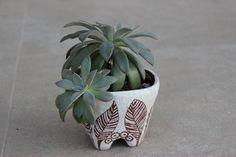 suculenta en maceta de cerámica vintage  con engobe blanco