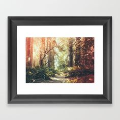 Redwood Highway Framed Art Print by sheexplores Wall Prints, Framed Art Prints, Fine Art Prints, Wood Canvas, Canvas Frame, Muir Woods National Monument, Photography For Sale, Zen Art, Custom Art