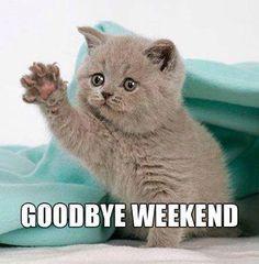 Image of grumpy cat memes clean funny 46 super funny grumpy cat Funny Cat Videos, Funny Cats, Funny Animals, Cute Animals, Memes Humor, Frases Humor, Best Cat Memes, Cute Cat Memes, Funny Monday Memes