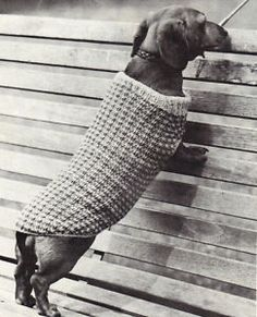 i can never find the right size coat for my little weiner dog so this is perfect!