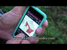 Audubon Mobile Guides
