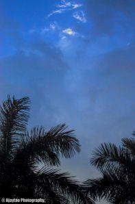 Sky amidst swaying palms - Ajaytao