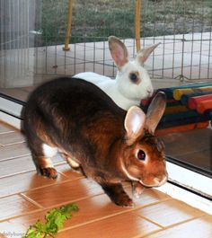 Bunny burglars quietly creep into the kitchen for a vegetable robbery - January 11, 2014
