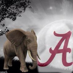 Will be in Alabama in a week! Alabama Tide, Alabama Crimson Tide Logo, Crimson Tide Football, Alabama Football, Football Fans, College Football, Football Stuff, Football Wallpaper, University Of Alabama