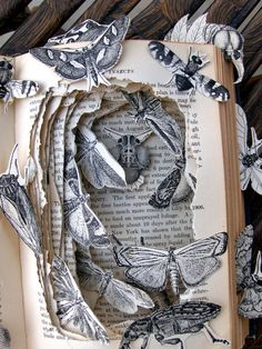 Mayberry's Insects. Book sculpture by Kelly Campbell