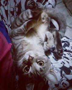 Good Afternoon #Kayla ❤