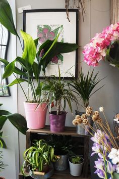 #aspidistra #dracaena #chlorophytum Patio Plants, Indoor Plants, Potted Plants, Plant Design, Garden Design, 1970s House, Chlorophytum, House Plant Care, Spider Plants