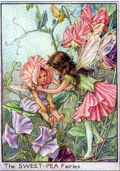 The Sweet-Pea Fairies Mary Barker