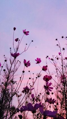 Ideas Flowers Pink Sky For 2019 Tumblr Wallpaper, Nature Wallpaper, Bts Wallpaper, Wallpaper Backgrounds, Phone Backgrounds, Aesthetic Iphone Wallpaper, Aesthetic Backgrounds, Aesthetic Wallpapers, Sky Aesthetic