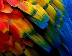 ducks feathers close up | K.: Probadme, dice Dios