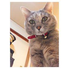 自撮リリィ #愛猫