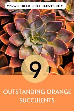 We've gathered a list of outstanding orange succulents that adds great color to your garden. Flowering Succulents, Indoor Succulents, Succulent Planter Diy, Succulent Landscaping, Growing Succulents, Succulent Care, Cacti And Succulents, Cactus Plants, Succulent Species