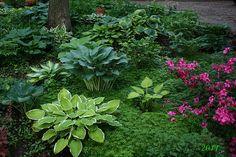 My Garden in the Shade!