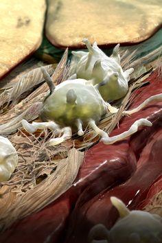 AS&K Visual Science - Medical Illustration & Animation on Behance