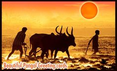 Pongal Greeting cards - Tamil. Follow us www.pinterest.com/webneel