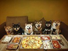 Por que alguém convidaria estes seis dogs para uma happy hour? |  12 reuniões inesperadas que você gostaria de saber como aconteceram