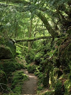 This scenic location is Puzzlewood, a popular outdoor tourist destination in Gloucestershire, England. It's said to have inspired J.R.R. Tolkien's conception of the Old Forest, Mirkwood, Lothlorien, and other places in his Middle Earth.