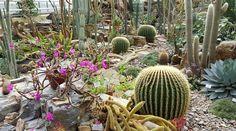 Einmal um die Welt — Flora und Fauna im botanische Garten München