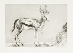 Available for sale from David Krut Projects, Diane Victor, Birth of a Nation: Springbokkie-Trojan Drypoint, 14 × 18 in Sale Artwork, Printmaking, Victor, Moose Art, Drypoint, South African Art, Art Inspiration, Contemporary Art, South African Artists