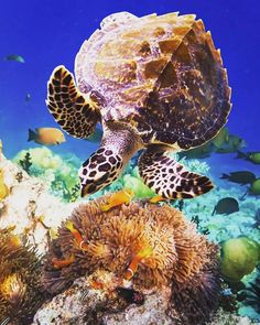 @Easyvoyage - The Great Barrier Reef a paradise for every scuba divers ! #Australia #turtles #reef #sea #myeasyvoyage #voyage #travel #travelgram #traveler #phototravel #holidaytravel #holidays #escape #vacation #vacances #world #destination #wanderlust #instatravel #nature Hotels-live.com via https://www.instagram.com/p/BFy42DLSYbW/ #Flickr