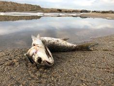 Oil spill reaches Laguna Beach, threatens Crystal Cove in Newport Beach as cleanup efforts intensify Laguna Beach, Newport Beach, Orange County Beaches, Environmental News, Ship Anchor, Oil Spill, Huntington Beach, Global Warming, Coast