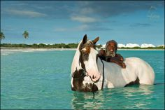 "Horses are not something you'd expect to find on Anguilla. But there is one stable where you can go out horseback riding on the beach (see ""Nothing to Do"" board). This photo is of Zambezi and his mare Juluca.  And yes, the horses will wade right into the water... IF you want them to. #Anguilla"