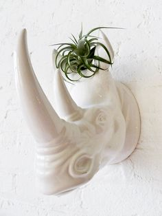 Rhino Toupee Head Garden. There are lots of cool air plants on this etsy site