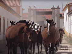 Sediada no Palácio Nacional de Queluz, a Escola Portuguesa de Arte Equestre foi fundada em 1979 com a finalidade de promover o…